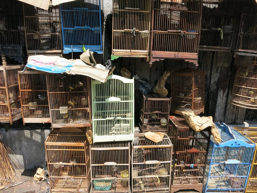 yogyakarta die indonesier haben 'nen vogel  today we travel