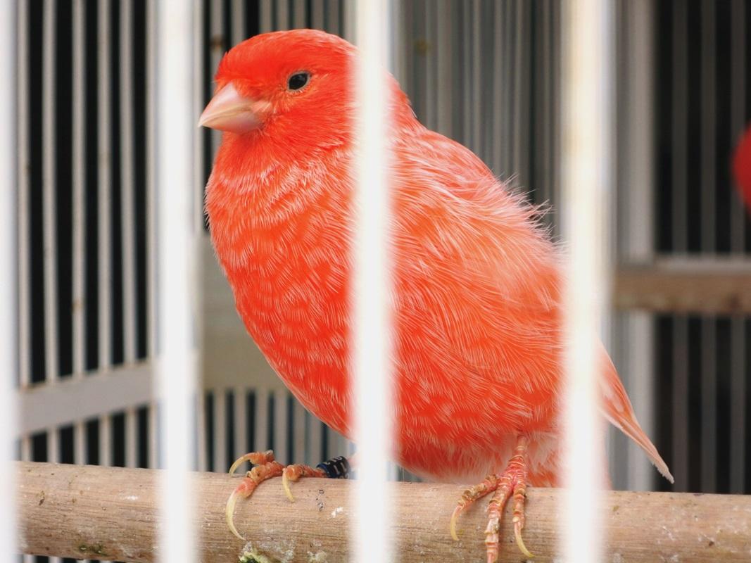 vogel yogyakarta