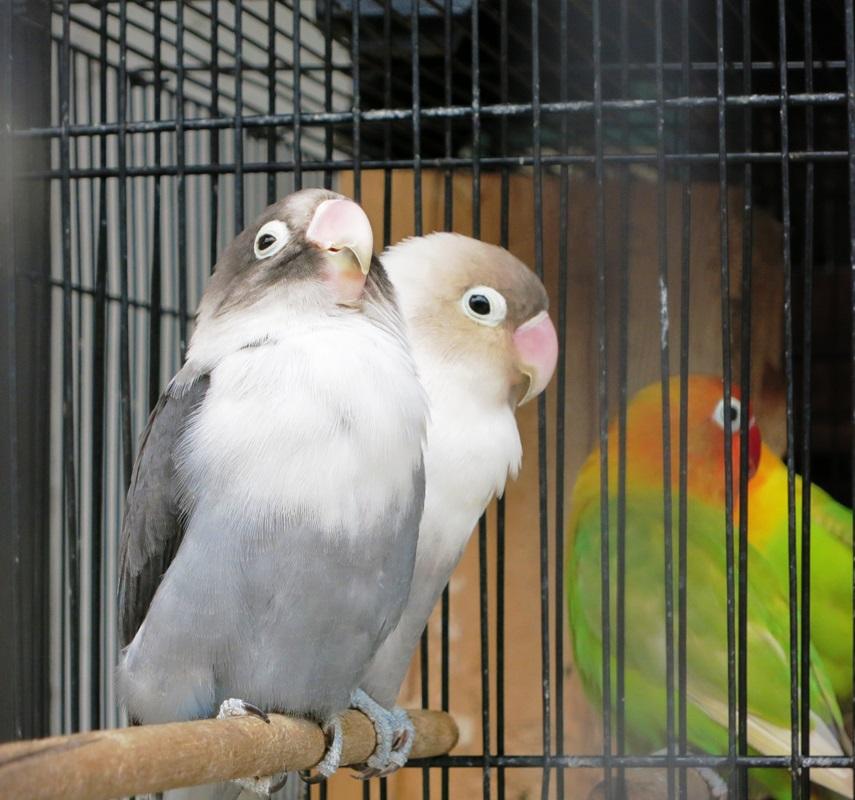 vogel 3