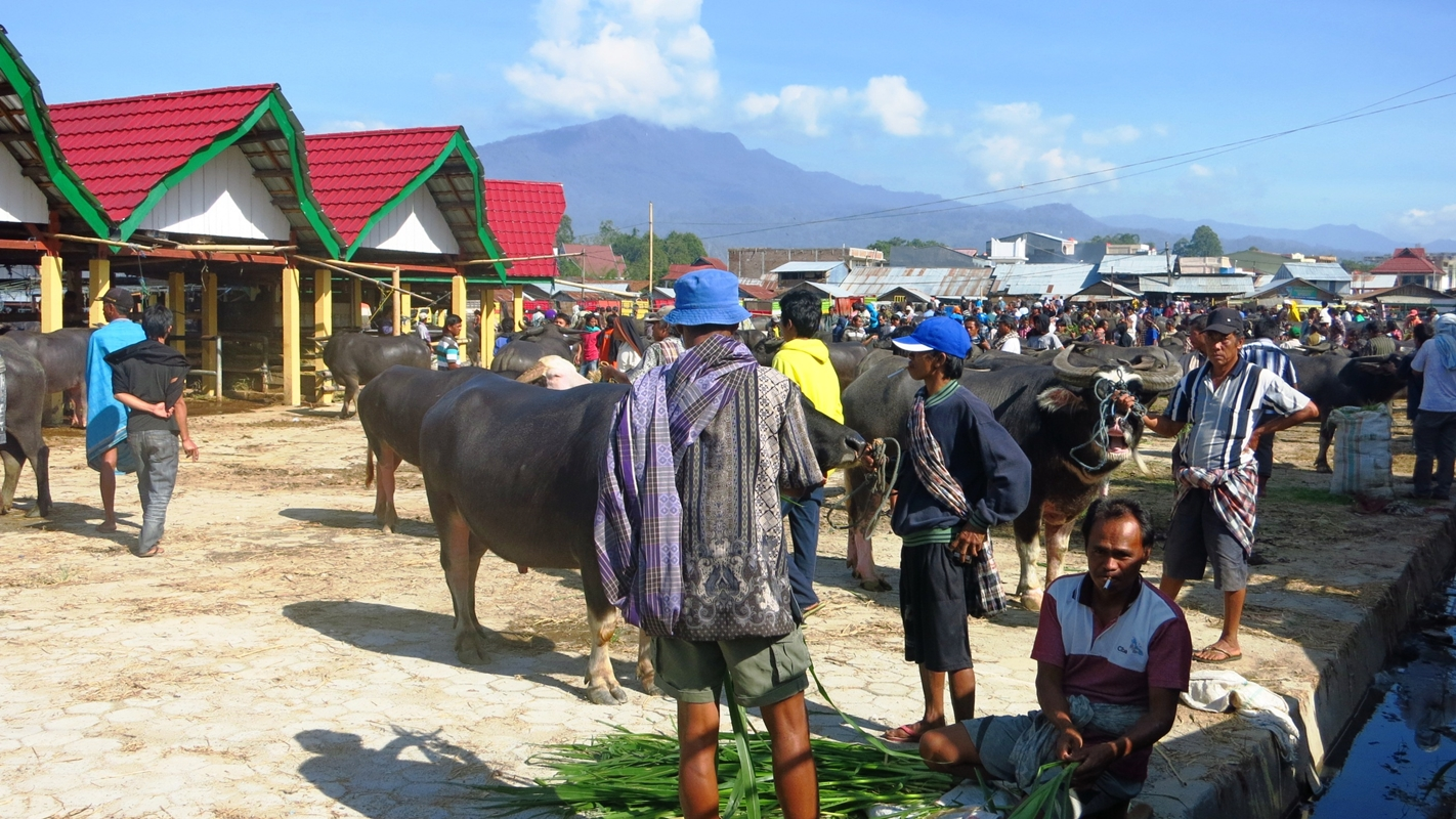 Toraja Büffelmarkt