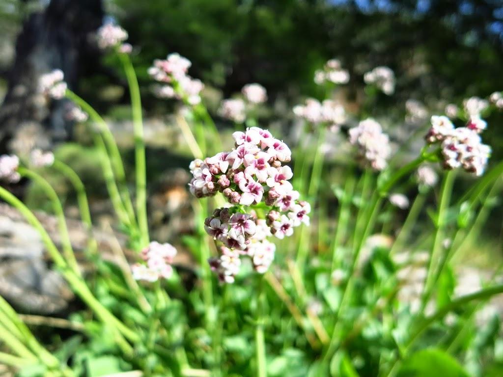 Blumen Patagonien
