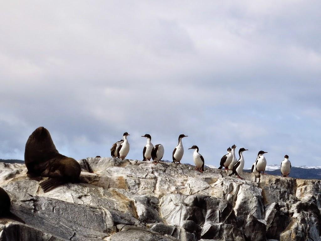 Beagle Kanal Pinguin Kormoran