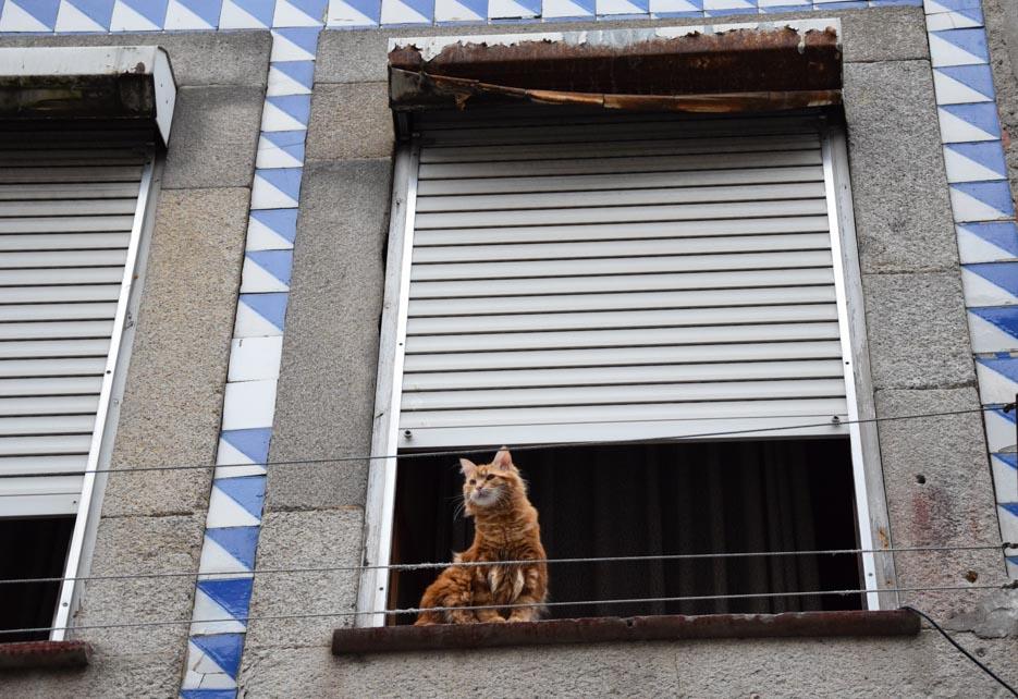 Porto Katze am Fenster