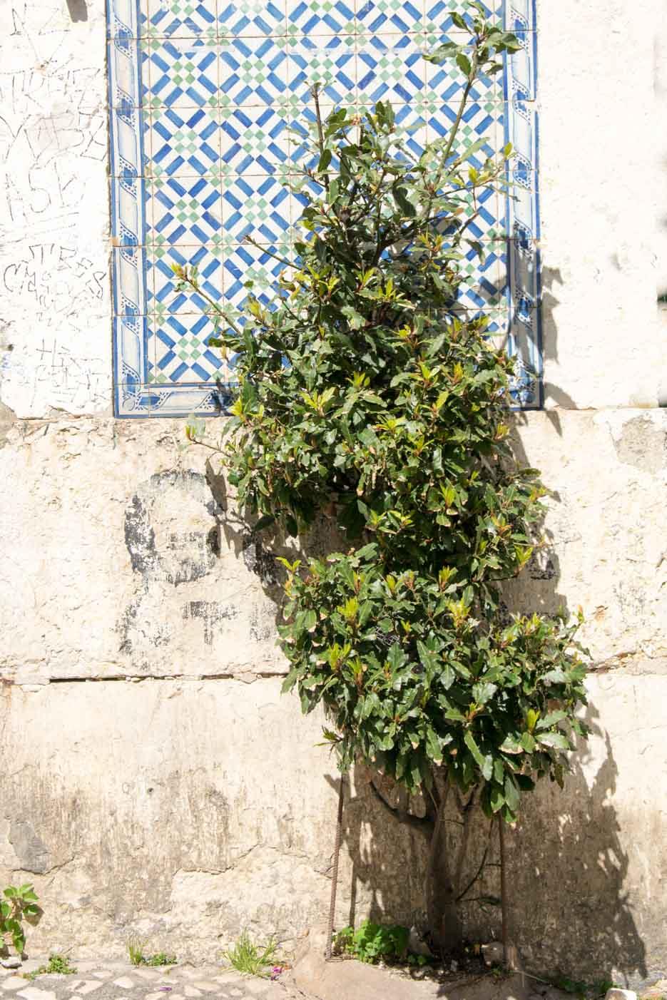 Lissabon Azulejos