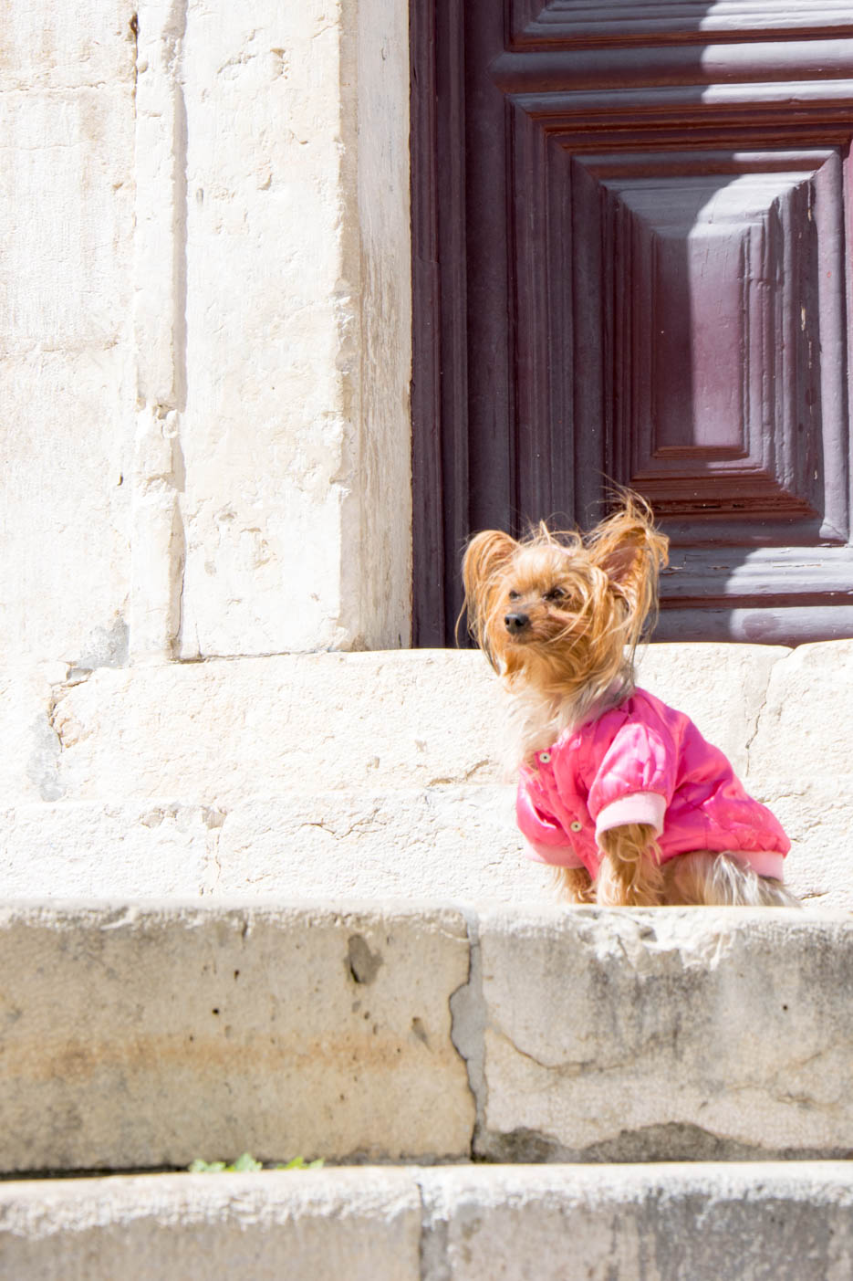 Lissabon Hund