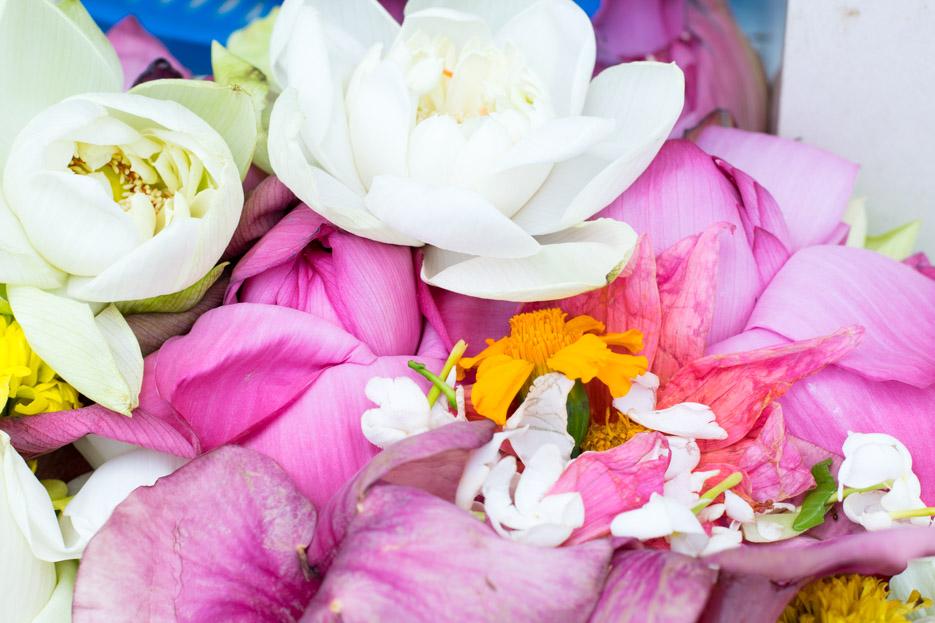 anuradhapura blumen buddha