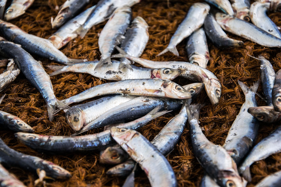 sri_lanka_negombo fish market