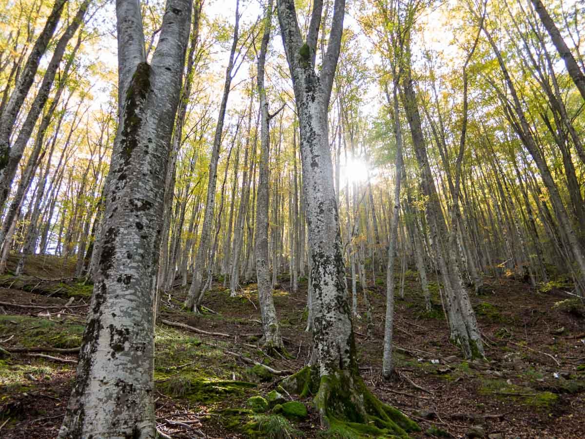 paranesti griechenland virgin forest