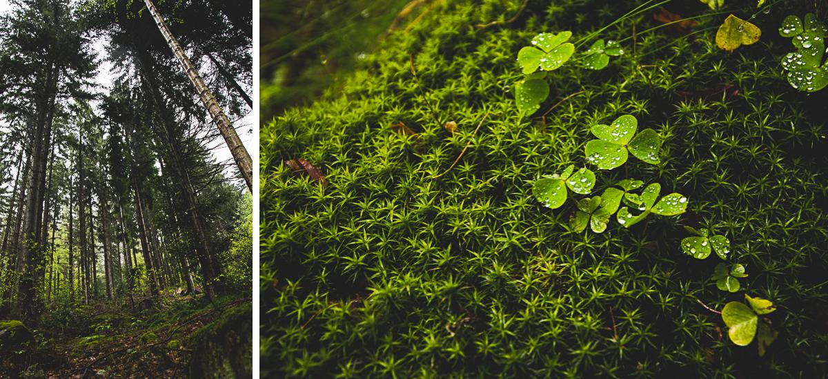 Hoefen Enz Wald wandern kleeblatt moos