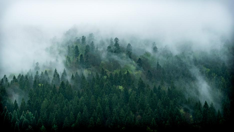 schwarzwald mystisch waldfoto