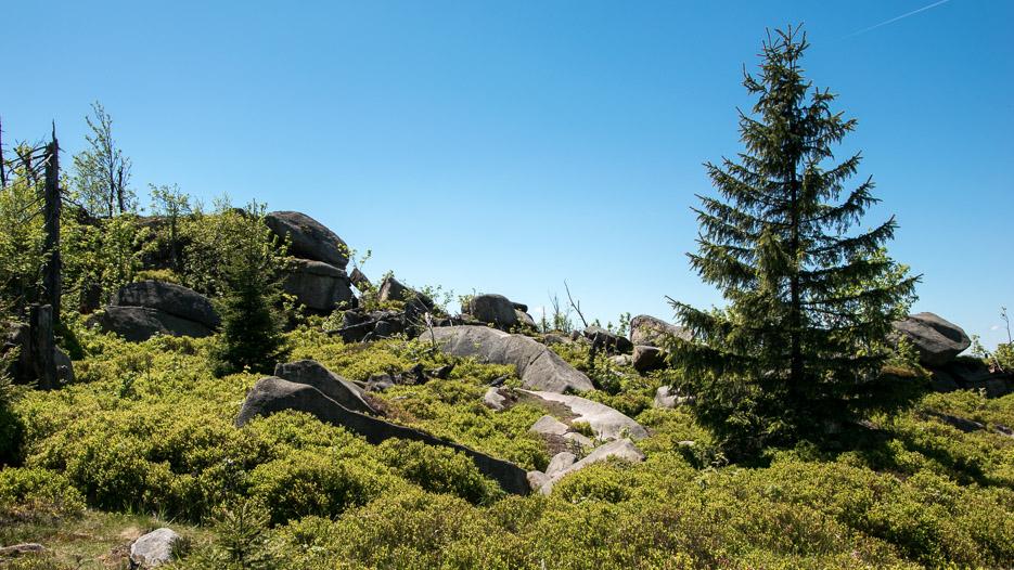 Leistenklippe Harz Wanderung Wald Natur Granitfelsen