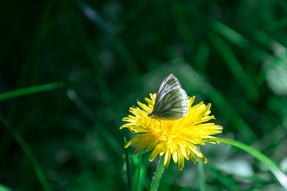 Harz Schmetterling Blume Natur