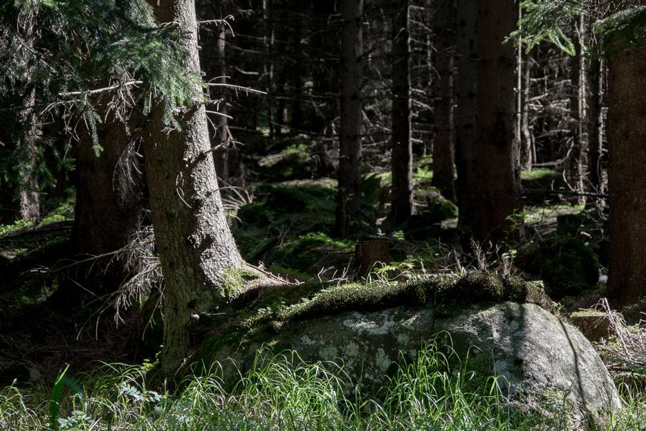Harz Natur Wald Moos
