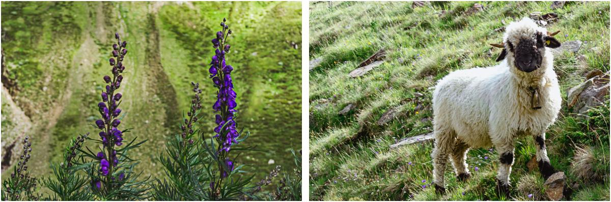 Alpen Flora Fauna