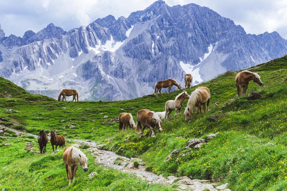Alpenpferde