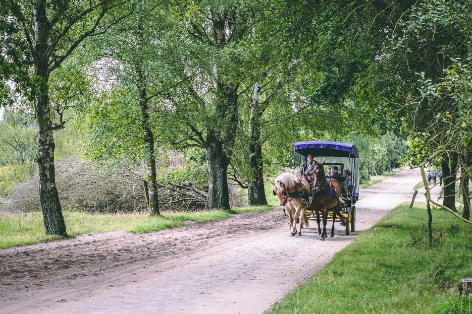 lüneburger heide kutsche wilsede ausflug pferd