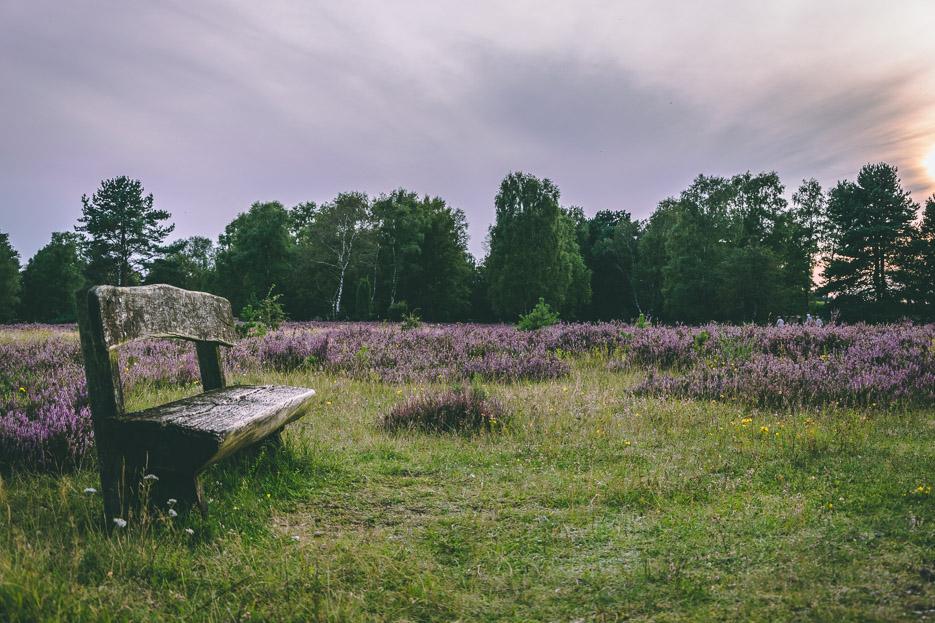 lüneburger heide bank sonnenuntergang natur blüte tipps