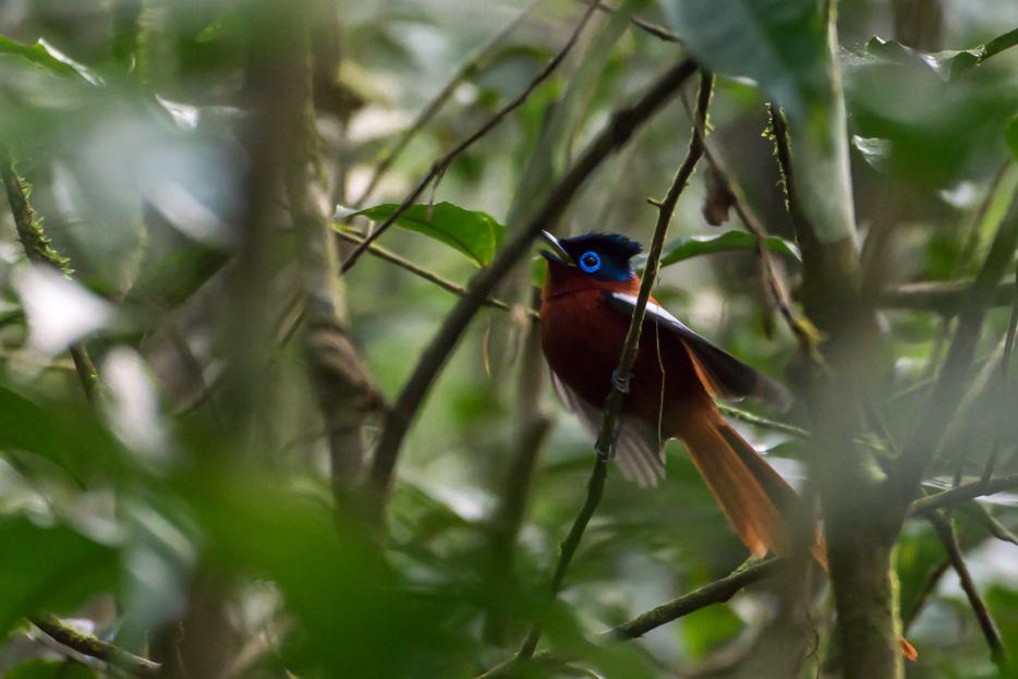 andasibe nationalpark madagaskar