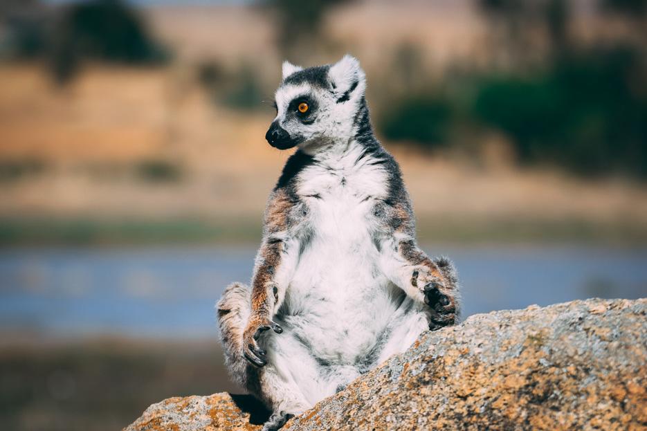 madagaskar lemuren anja reservat