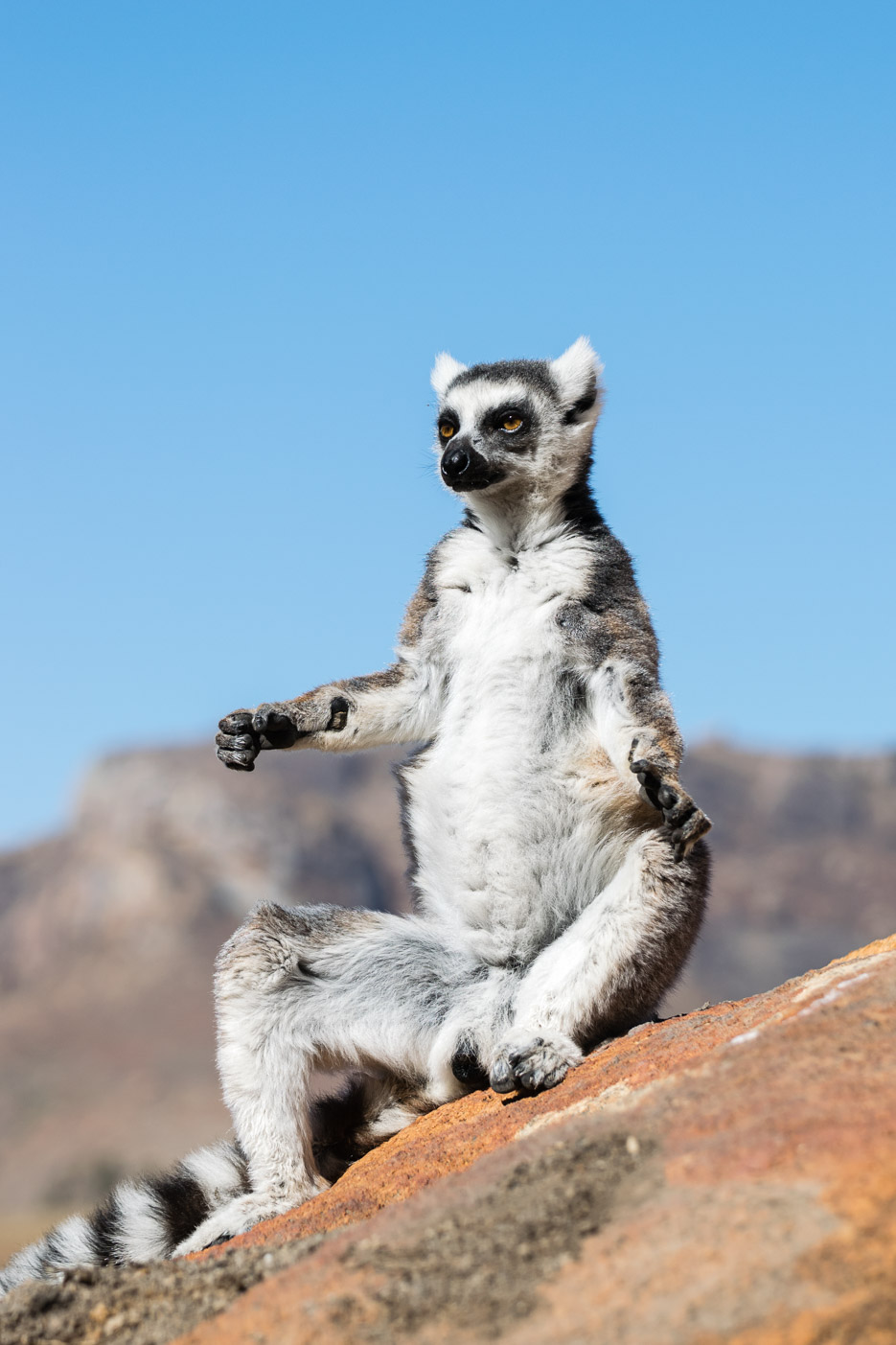 lemuren kattas sonnenbad madagaskar