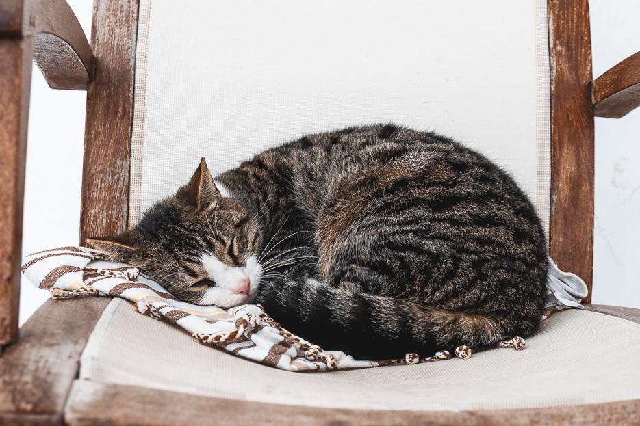 Griechenland Katzen Kykladen Paros Naxos