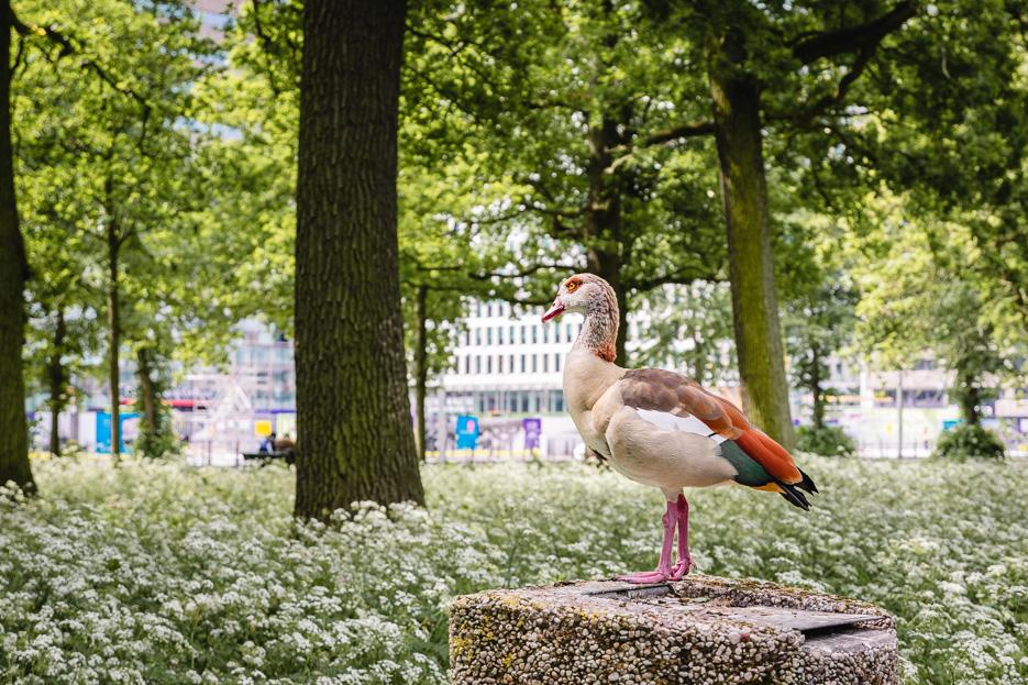 Den Haag Park