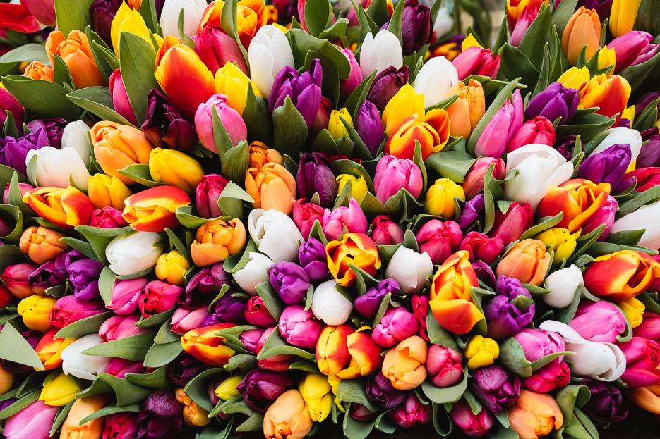 blumen tulpen wochenmarkt münster samstag