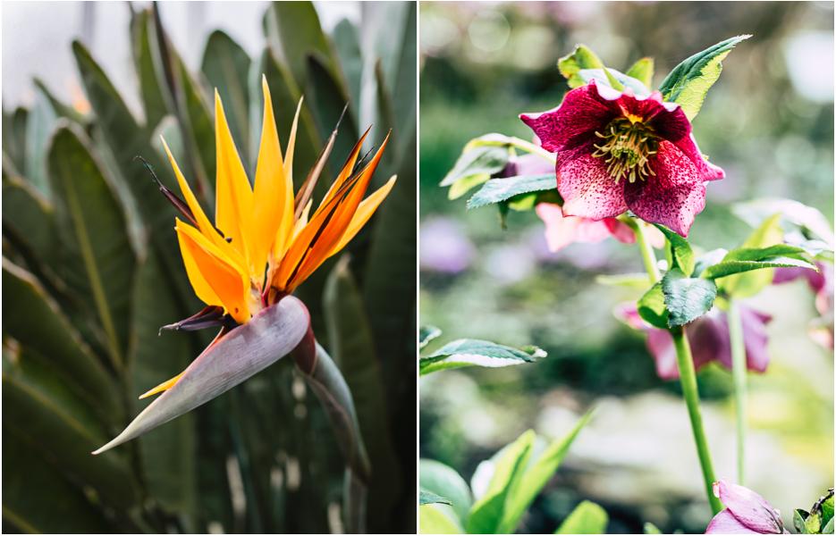 münster botanischer garten