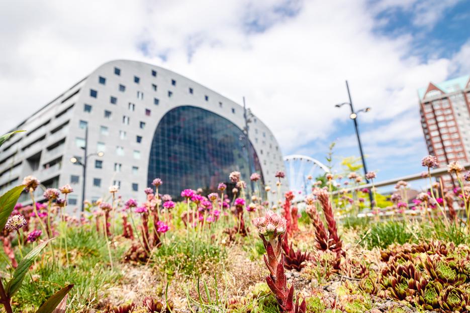 markthalle rotterdam architektur