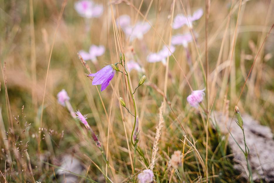 Monte Generoso Blumen