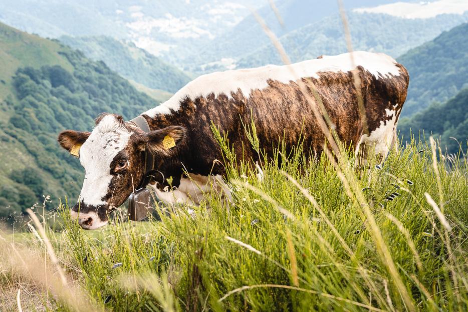 Lugano Kuh Monte Generoso