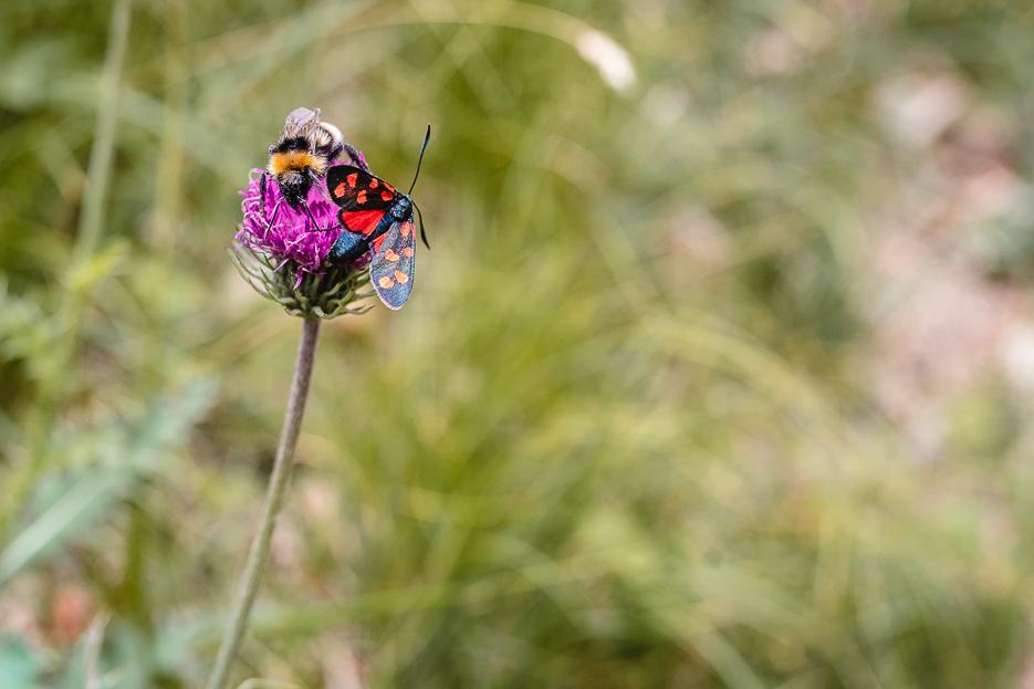 Lugano Wandern Schmetterling Tiere Pflanzen